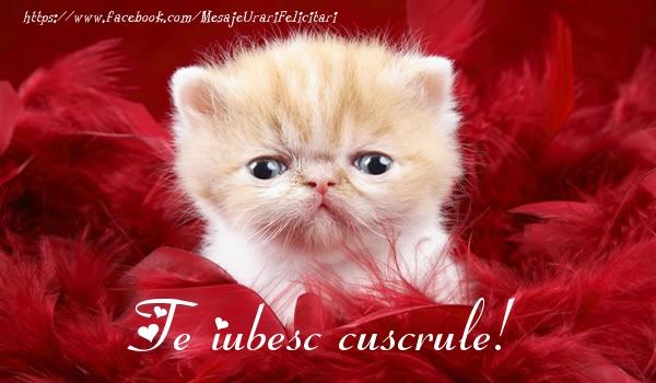 Felicitari frumoase de dragoste pentru Cuscru | Te iubesc cuscrule!