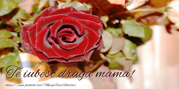 Felicitari frumoase de dragoste pentru Mama | Te iubesc draga mama!