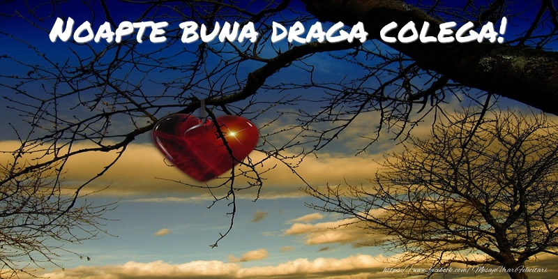 Felicitari frumoase de noapte buna pentru Colega | Noapte buna draga colega!